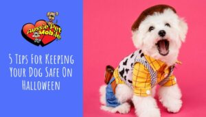 5 Tips For Keeping Your Dog Safe On Halloween Oct 2021
